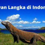 14+ Hewan Langka yang Ada di Indonesia ini Sulit Ditemukan