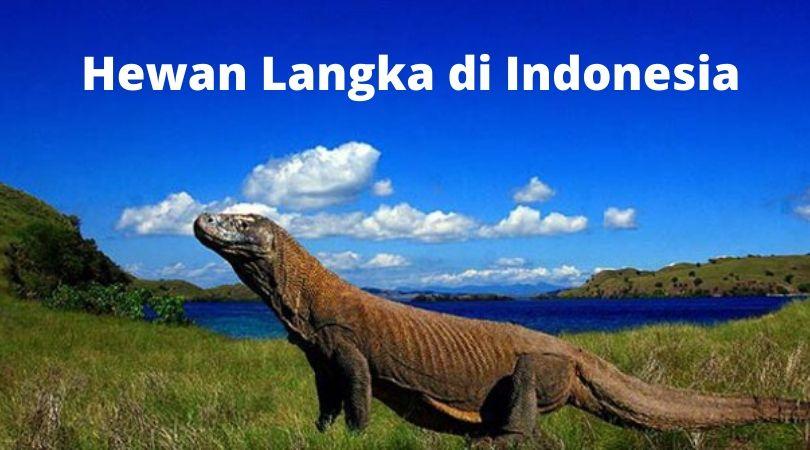 Hewan Langka