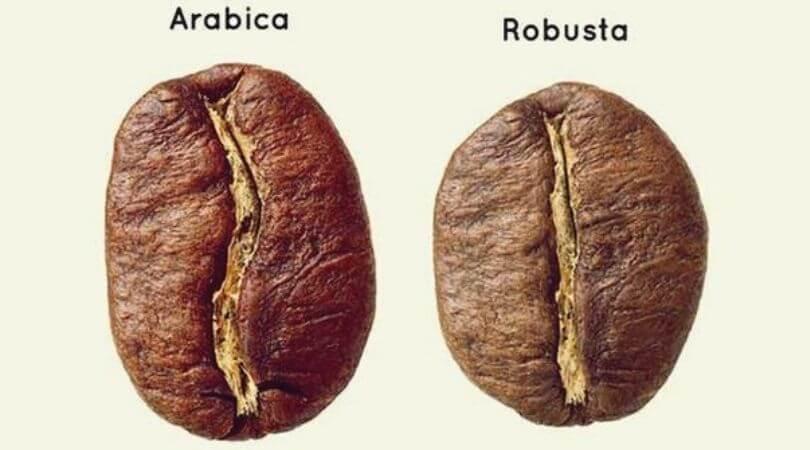 perbedaan arabika dan robusta