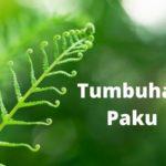 Tumbuhan Paku : Jenis, Ciri dan Contoh Tumbuhan Paku