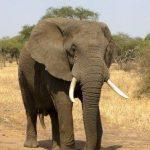 10 Hewan Terbesar di Dunia Sepanjang Masa