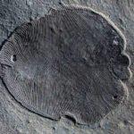 Penemuan Fosil Hewan Tertua Di Dunia yang Pernah Hidup