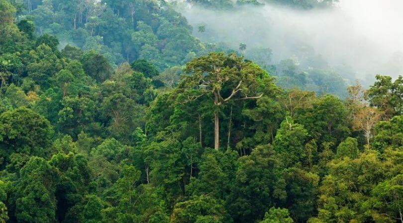 Ciri ciri hutan hujan tropis