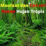 9 Manfaat dan Ciri Ciri Hutan Hujan Tropis