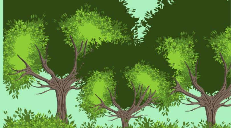 Pentingnya menjaga kelestarian hutan