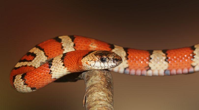 arti mimpi tentang ular
