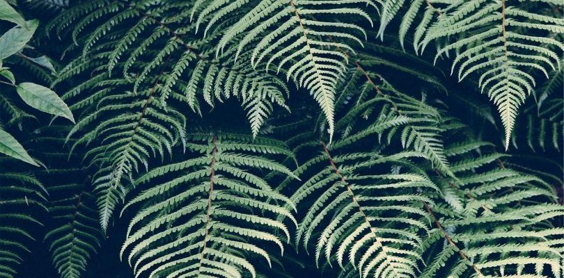 Pengertian Kingdom Plantae