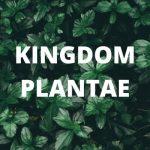 6 Ciri-ciri Kingdom Plantae Beserta Jenis dan Pengertiannya